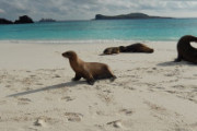 Experience the Galapagos Islands! Truly a Bucket List Destination!
